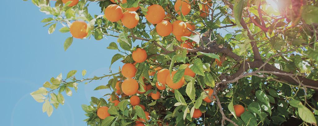 orange gin ingredients